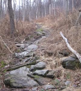 Rocky trail through grass